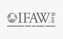 IFAW case study
